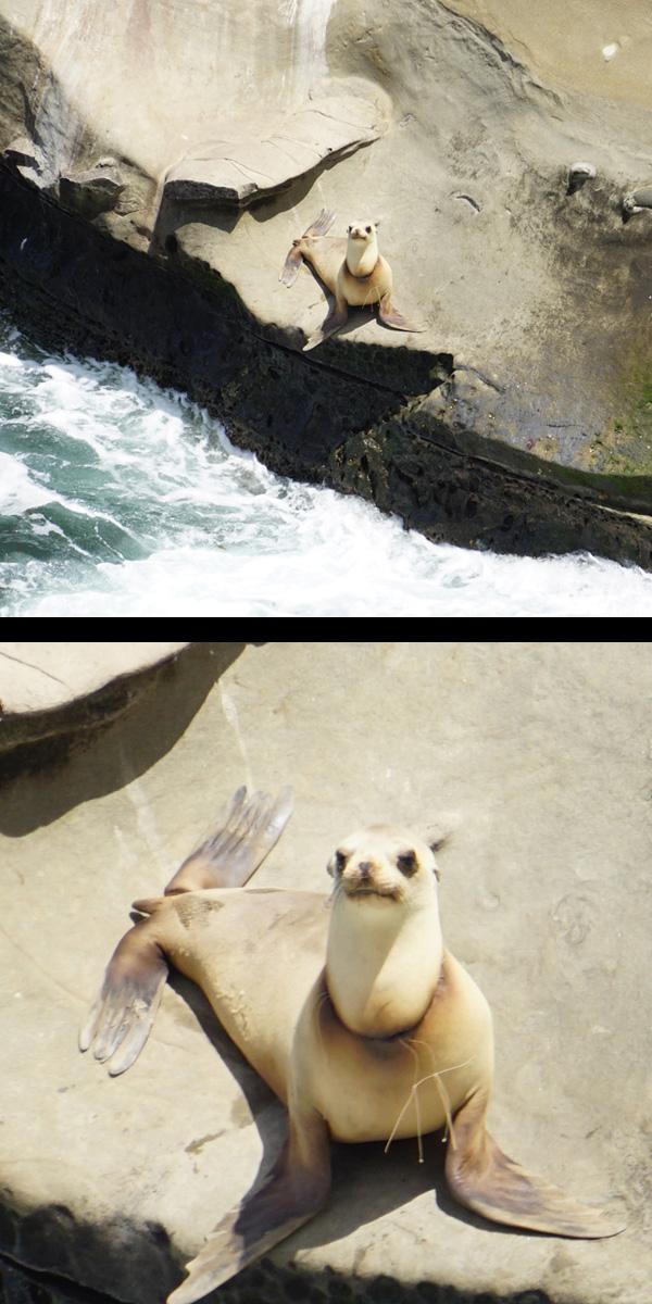 Seals=split